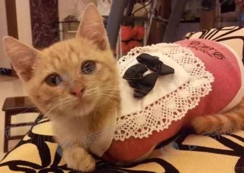 为什么猫咪穿上衣服就不走路了?